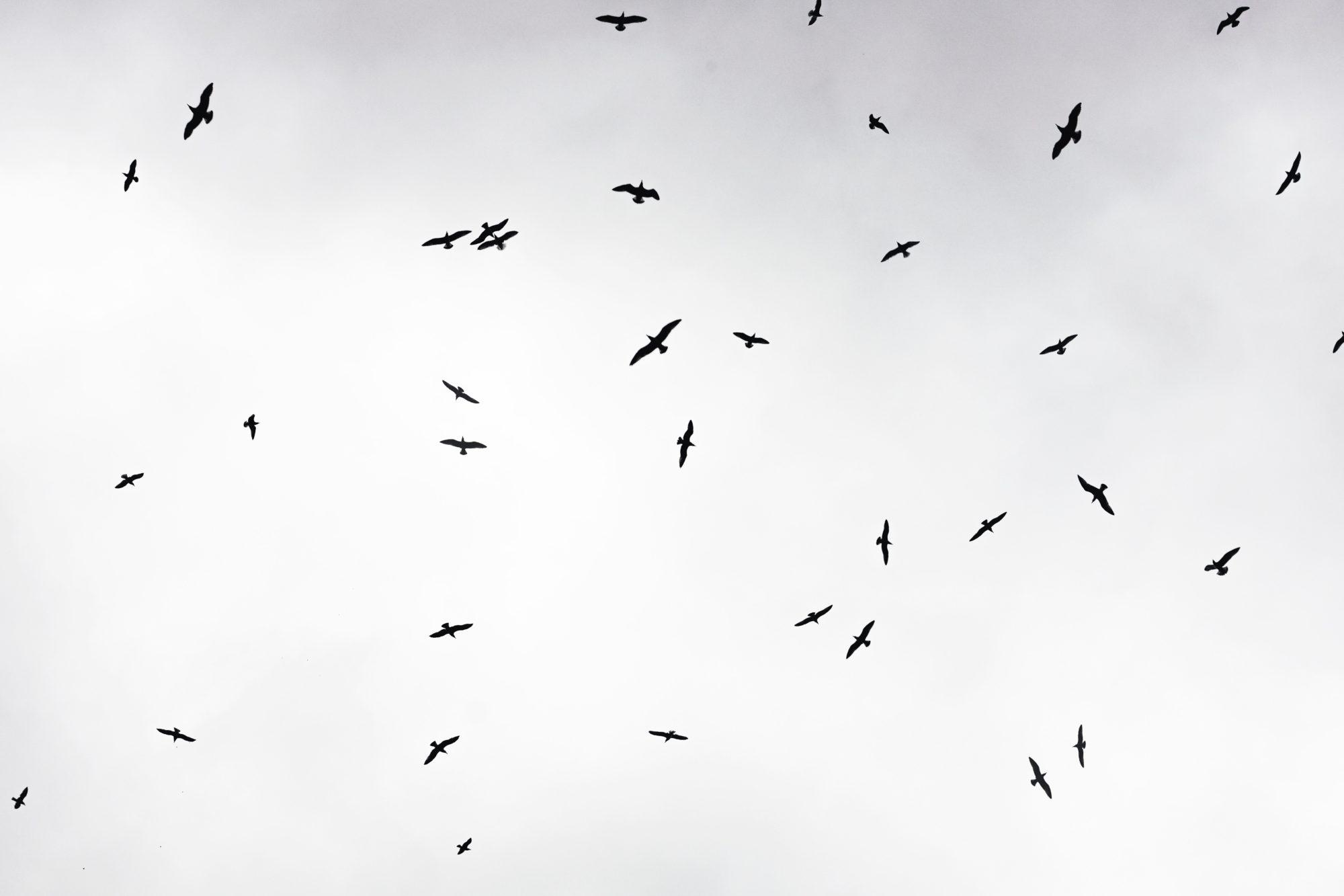 Eine Schar Vögel in der Luft