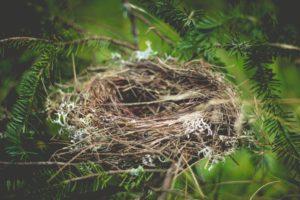 Ein leeres Vogelnest zwischen Zweigen